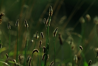 Simple - These grasses were just caught beautifully in the low light.