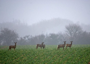 Deer - You don't need to get extremely close to get nice images of larger animals