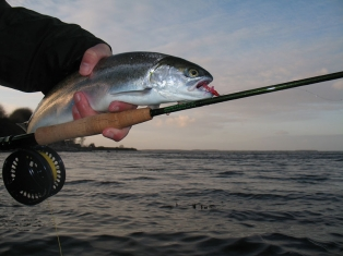 One of those days - This is one of some 10-12 fish I managed to haul out of the same little hole on a single trip