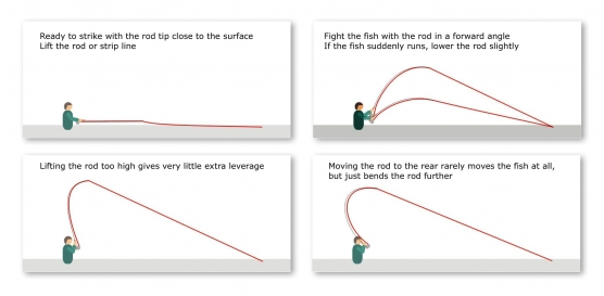 Strike and fight angles - The different rod angles illustrated