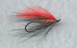 Chinook Spey