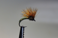 A dandy emerger.