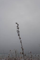 Winter twigs