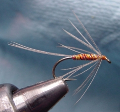 A soft hackle with a sparse, swept back hackle