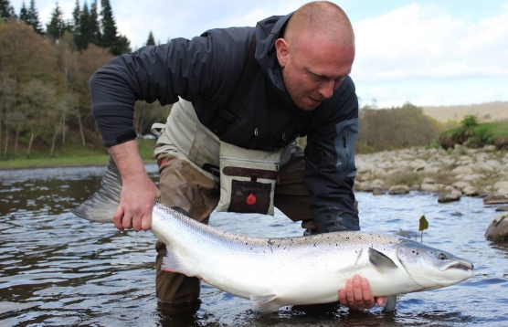 The much sought after Scottish spring salmon