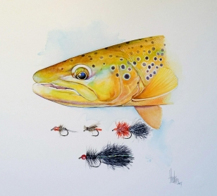 Trout and flies