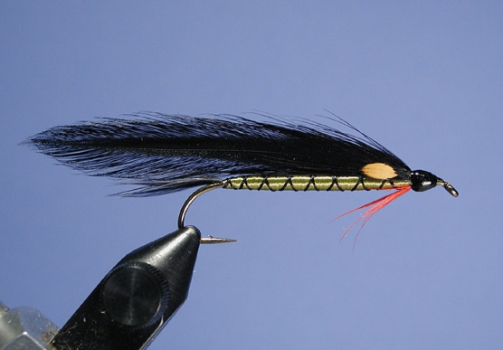 Scaled Shiner Streamer