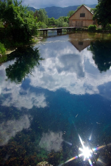 Pond reflection -