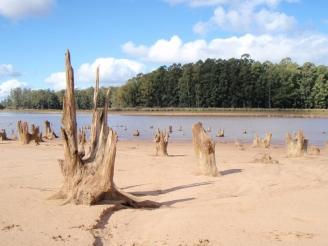 Tree stumps - The old trees visible at low water levels