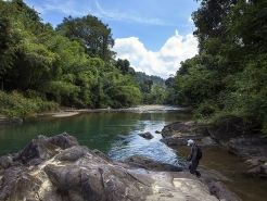 Jungle river - In spite of the dense growth there are stretches with space