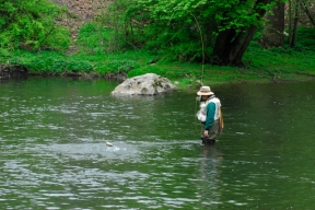 Jumping trout.  Little Juniata River, PA -