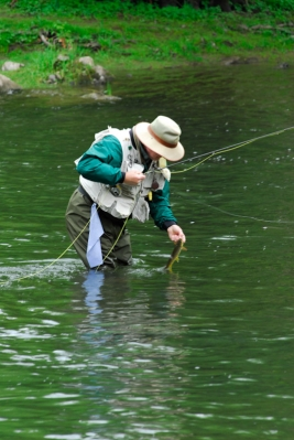 Angler releasing trout.  Little Juniata River, PA -