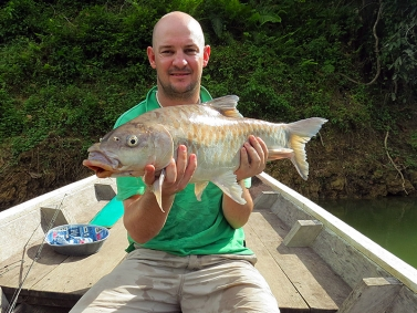 A jungle carp - The masheer are related to the carp