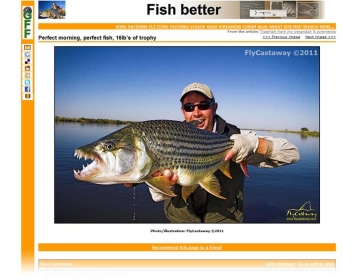 7) Tigerfish - A single picture that draws a lot of traffic
