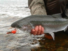 Rainbow - A decent Lake Vintter rainbow