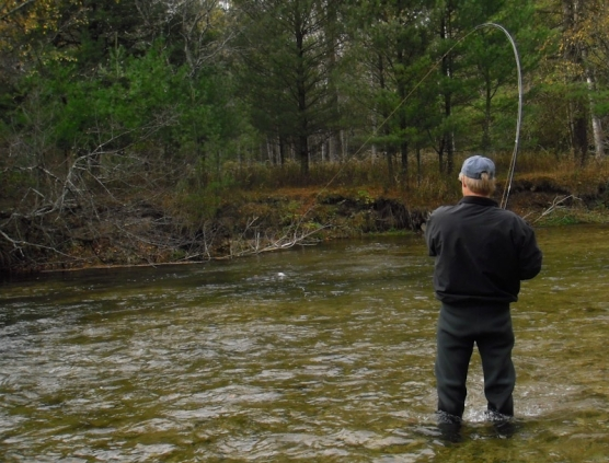 Anglers - The planted trout take to woody hiding places in the wate