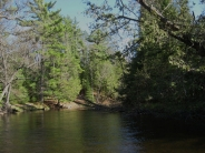 Au Sable River - Brown trout dominate many stretches, with brook and rainbow trout also present.