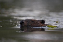 A regular visitor while fishing -