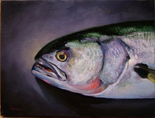 Bluefish -