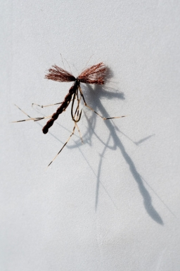 Brown mundane crane fly - This fly uses dark brown Antron for the body and wings. Too dark compared to most naturals, but fine when seen from below by a fish. The body is a bit long and the wings a bit short on this prototype specimen.