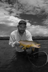 Selective color brown trout -