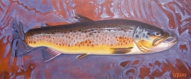 Brown trout in the shallows -