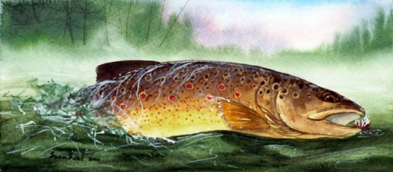 Brown Trout takes a dry fly -