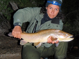 Brown trout -