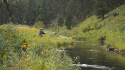Casting on Rapid Creek -