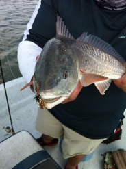 Redfish - One more fell for the Goldmine Crab