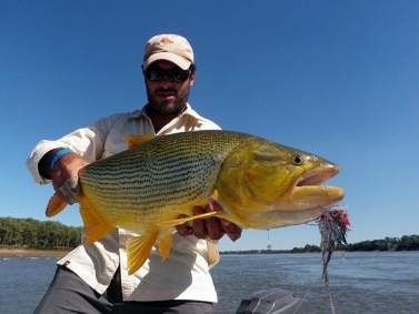 Dorado - A hefty dorado caught ona large Malbran
