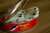 A tin of sardines - Flies for bass need not be that fancy