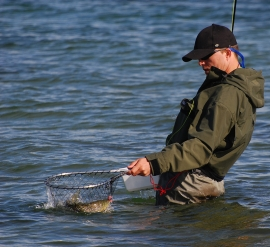 Netting - Richard netting a sea trout