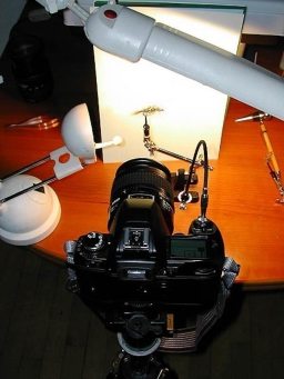 "Two lamps - A simple two-lamp setup: a neutral light florescent lamp overhead and a cheap halogen lamp as a fill light. A piece of white paper as the background, and you\'re all set. Notice the ""remote\"" trigger - an old fashioned mechanical cable trigger - which helps avoid shake."