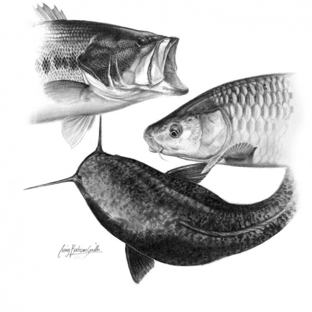 Fish collage -