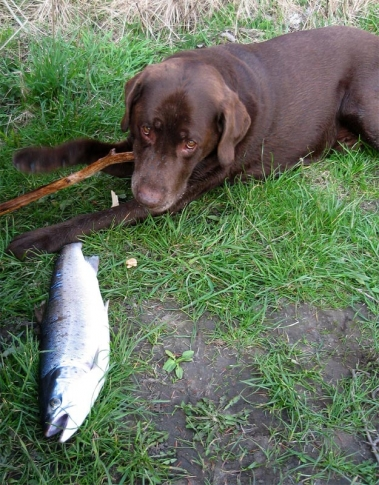 Dogfish? - Charlie and a newly caught sea trout