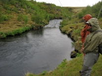 There are 8 kg/16 lbs. brown trout in this little stream. -