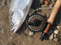 Another one - The LAW landed its umpteenth sea trout