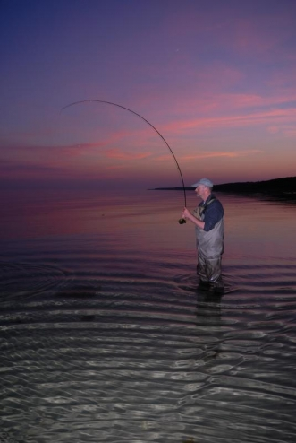 Silhouette and color - Using the dusk light and a flash secured this beautifully colored bent-rod picture