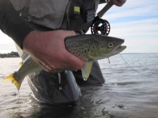 Where things happen - The action is often close to the surface when fish are landed and released