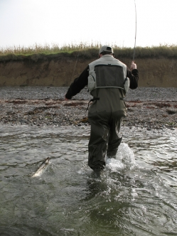 Quick landing - Vanuz demonstrates an easy way to land a trout - just pull it into the shallow water