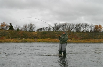 Hookup! - Salmon attached to the two hand rod