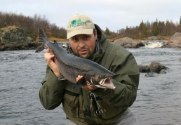 Kola salmon - The author Mindaugas Banelis ready to release a kola Salmon