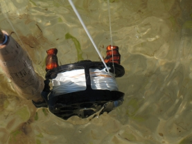A salty rinse! - Whenever the reel is dirty, I simply dunk it in whatever water I have nearby - mostly saltwater