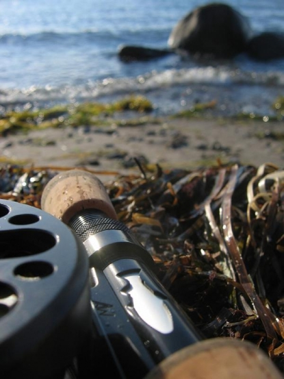 Closeup and perspective - This image both shows details of the rod and reel as well as the water and environment in the background