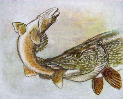 Pike attacking a walleye  - Acrylic painting