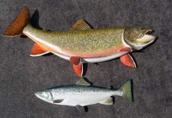 Giant Brook Trout 33 inches in length and Atlantic Salmon - Wood carvings
