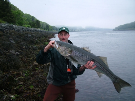 The artist with a very decent striper -