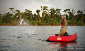 Tarpon jump - Also when hooked from a float tube, which obviously gives a fantastic view of the action