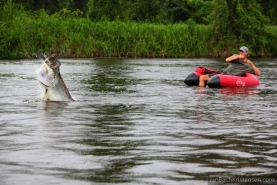 "Massive - This shot shows the size of the larger tarpon compared to the angler and his ""boat"""